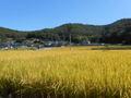 自然から与えられたままの玄米 1合(岡山県内産)