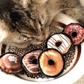 Dreamin' Donuts