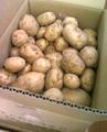 【春の新じゃが】農家直送!「特別栽培」おいしいじゃがいも10kg