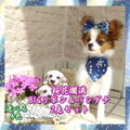 【送料無料】桜 BIGリボン&バンダナ 2点セット