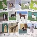 dogs calendar 2021/1,500円(税別)