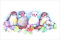 ポストカード「雀と文鳥」(PIK0013)