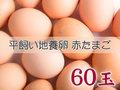たまごづくし B-③ 平飼い地養卵赤たまご 60個