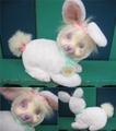 Bunny Surprise/ぬいぐるみ(A)