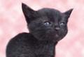 ポストカード1 黒猫
