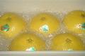 晩白柚 2Lサイズ(5個入り)