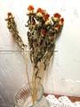 ドライフラワー紅花
