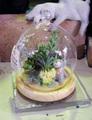 多肉植物アート*ドーム○造花