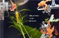 【サイトピン用】サファリダンパー orange gaeru
