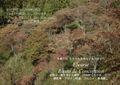 晩秋の吉野 櫻と紅葉のバランス  NO 69 A3ノビ プリント  329mmx483mmm