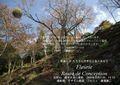 2009年 晩秋の吉野 櫻と紅葉吉野桜の枝に寄生した  ヤドリギ  上千本  NO 071 A3ノビ プリント  329mmx483mmm