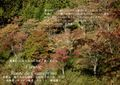 2009年 晩秋の吉野 櫻と紅葉 上千本  NO 073 A3ノビ プリント  329mmx483mmm 櫻と紅葉 印刷用写真タイプ
