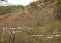 2009年 晩秋の吉野 櫻と紅葉 上千本  NO 077 A3ノビ プリント  329mmx483mmm