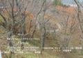 2009年 晩秋の吉野 櫻と紅葉 上千本  NO 081 A3ノビ プリント  329mmx483mmm