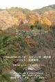 2009年 晩秋の吉野 櫻と紅葉 中千本  NO 093 A3ノビ プリント  329mmx483mmm