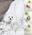 【☆熱中症予防にとっても効果的♪☆】Ice chou-chou Fleur(アイスシュシュフルール)♪