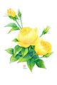 黄色薔薇イラストはがきセット