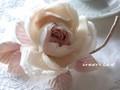 春待ち華やぎの薔薇