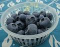 生食ブルーベリー