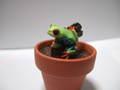 アカメアマガエル植木鉢