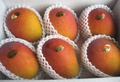 宮古島産完熟アップルマンゴーB級品4kg  (2kg箱入り)×2箱