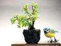 金露梅、水昇石鉢