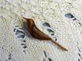 セキレイのナツメのブローチ