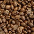 グァテマラ 珈琲豆