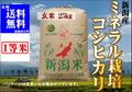 2年産ミネラル栽培米コシヒカリ 玄米25㎏【玄米色彩選別済】