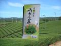 うれしの茶100g