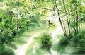 光の泉 - 上高地・田代池周辺