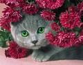 【1-34】A4 菊にかくれんぼの猫