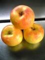 余市産りんご「トキ」5kg詰め 14~20玉