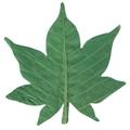 天然敷葉G4 緑 もみじ型