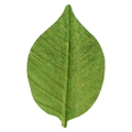 天然敷葉G7 緑 桜型