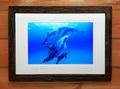 Heavenly Dolphins #001