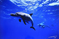 Smily Dolphin #002