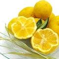 【ネット限定】【家庭用】鶴田有機農園の初夏の柑橘5種詰め合わせ3kg
