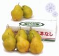 岡田 廣さんの洋梨2種詰合せ(シルバーベル&ラ・フランス) 約5kg(各4~8玉)