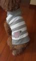 白×グレー イニシャル刺繍