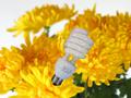 電球型蛍光灯(22W明るさは100W)