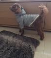 犬服型紙 パーカー dog-1