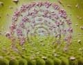Portal~春~