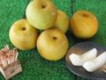 南月梨 5kg(12粒)