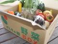 旬の野菜ボックス(贈答用:クール便)