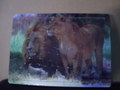 木製動物パズル「ライオン」