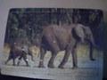 木製動物パズル「ゾウ」