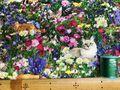布「お花畑に猫2」