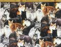 完売 布「猫1」リアルプリント