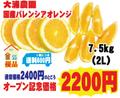【大浦農園】≪優品≫国産バレンシアオレンジ7.5kg(2L)